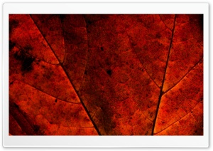 Rust Colored Leaf HD Wide Wallpaper for Widescreen