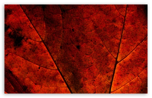 Rust Colored Leaf ❤ 4K UHD Wallpaper for Wide 16:10 5:3 Widescreen WHXGA WQXGA WUXGA WXGA WGA ; 4K UHD 16:9 Ultra High Definition 2160p 1440p 1080p 900p 720p ; Standard 4:3 5:4 3:2 Fullscreen UXGA XGA SVGA QSXGA SXGA DVGA HVGA HQVGA ( Apple PowerBook G4 iPhone 4 3G 3GS iPod Touch ) ; Tablet 1:1 ; iPad 1/2/Mini ; Mobile 4:3 5:3 3:2 16:9 5:4 - UXGA XGA SVGA WGA DVGA HVGA HQVGA ( Apple PowerBook G4 iPhone 4 3G 3GS iPod Touch ) 2160p 1440p 1080p 900p 720p QSXGA SXGA ;