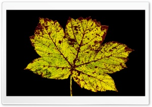 Rust Colored Leaf, Autumn HD Wide Wallpaper for Widescreen