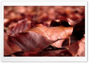 Rust Colored Leaves HD Wide Wallpaper for Widescreen