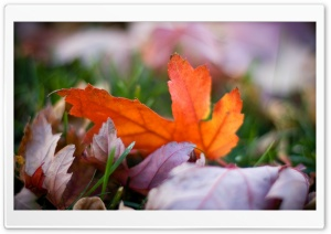 Rust Colored Leaves Bokeh HD Wide Wallpaper for Widescreen