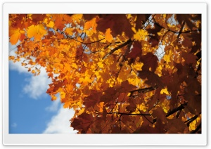 Rust Colored Maple Leaves HD Wide Wallpaper for Widescreen