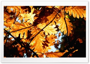 Rust Colored Oak Leaves HD Wide Wallpaper for Widescreen