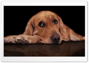 Sad Dog HD Wide Wallpaper for Widescreen