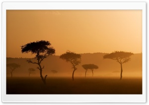 Safari HD Wide Wallpaper for Widescreen