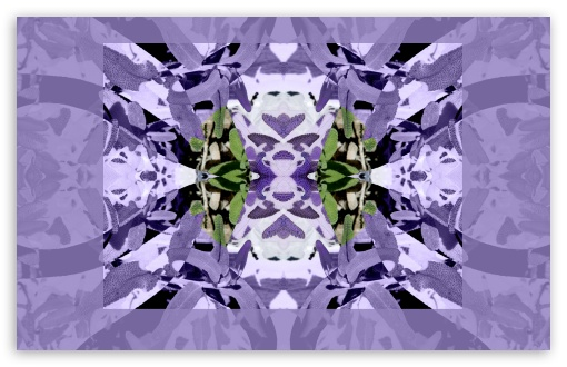 Download Sage with Lavender Symmetry Art HD Wallpaper