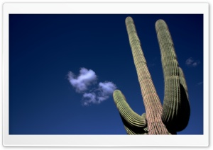 Saguaro Cactus HD Wide Wallpaper for Widescreen