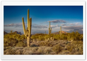 Saguaro Cactus, Arizona HD Wide Wallpaper for Widescreen
