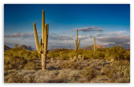 Saguaro Cactus, Arizona ❤ 4K UHD Wallpaper for Wide 16:10 5:3 Widescreen WHXGA WQXGA WUXGA WXGA WGA ; 4K UHD 16:9 Ultra High Definition 2160p 1440p 1080p 900p 720p ; UHD 16:9 2160p 1440p 1080p 900p 720p ; Standard 4:3 5:4 3:2 Fullscreen UXGA XGA SVGA QSXGA SXGA DVGA HVGA HQVGA ( Apple PowerBook G4 iPhone 4 3G 3GS iPod Touch ) ; Smartphone 16:9 3:2 5:3 2160p 1440p 1080p 900p 720p DVGA HVGA HQVGA ( Apple PowerBook G4 iPhone 4 3G 3GS iPod Touch ) WGA ; Tablet 1:1 ; iPad 1/2/Mini ; Mobile 4:3 5:3 3:2 16:9 5:4 - UXGA XGA SVGA WGA DVGA HVGA HQVGA ( Apple PowerBook G4 iPhone 4 3G 3GS iPod Touch ) 2160p 1440p 1080p 900p 720p QSXGA SXGA ;