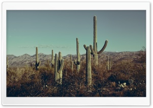Saguaro National Park East, Arizona HD Wide Wallpaper for Widescreen