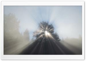 Saint Tree Ultra HD Wallpaper for 4K UHD Widescreen desktop, tablet & smartphone