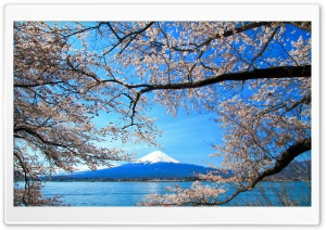 Sakura and Mount Fuji HD Wide Wallpaper for Widescreen
