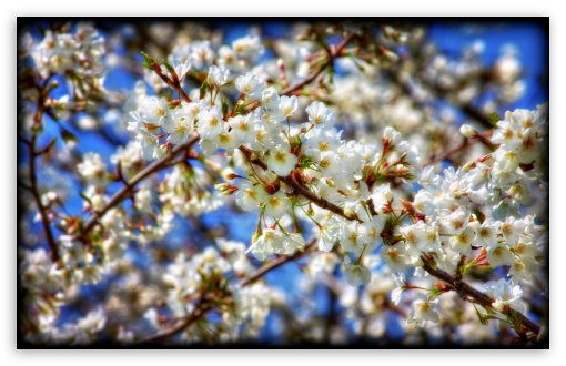 Sakura Branch HD wallpaper for Wide 16:10 5:3 Widescreen WHXGA WQXGA WUXGA WXGA WGA ; HD 16:9 High Definition WQHD QWXGA 1080p 900p 720p QHD nHD ; UHD 16:9 WQHD QWXGA 1080p 900p 720p QHD nHD ; Standard 4:3 5:4 3:2 Fullscreen UXGA XGA SVGA QSXGA SXGA DVGA HVGA HQVGA devices ( Apple PowerBook G4 iPhone 4 3G 3GS iPod Touch ) ; Tablet 1:1 ; iPad 1/2/Mini ; Mobile 4:3 5:3 3:2 16:9 5:4 - UXGA XGA SVGA WGA DVGA HVGA HQVGA devices ( Apple PowerBook G4 iPhone 4 3G 3GS iPod Touch ) WQHD QWXGA 1080p 900p 720p QHD nHD QSXGA SXGA ; Dual 16:10 5:3 16:9 4:3 5:4 WHXGA WQXGA WUXGA WXGA WGA WQHD QWXGA 1080p 900p 720p QHD nHD UXGA XGA SVGA QSXGA SXGA ;