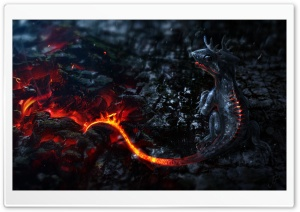 Salamander Artwork HD Wide Wallpaper for Widescreen