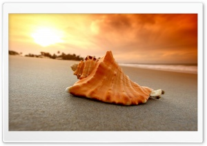 Sand Beach Shell Sea HD Wide Wallpaper for 4K UHD Widescreen desktop & smartphone