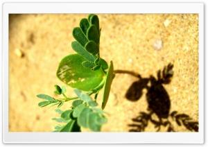 Sand Plant HD Wide Wallpaper for 4K UHD Widescreen desktop & smartphone