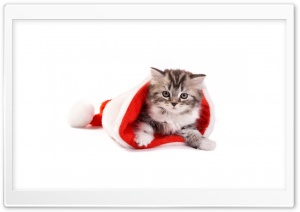 Santa Cat HD Wide Wallpaper for 4K UHD Widescreen desktop & smartphone