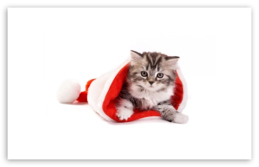 Santa Cat HD wallpaper for Wide 16:10 5:3 Widescreen WHXGA WQXGA WUXGA WXGA WGA ; HD 16:9 High Definition WQHD QWXGA 1080p 900p 720p QHD nHD ; Standard 4:3 5:4 3:2 Fullscreen UXGA XGA SVGA QSXGA SXGA DVGA HVGA HQVGA devices ( Apple PowerBook G4 iPhone 4 3G 3GS iPod Touch ) ; Tablet 1:1 ; iPad 1/2/Mini ; Mobile 4:3 5:3 3:2 16:9 5:4 - UXGA XGA SVGA WGA DVGA HVGA HQVGA devices ( Apple PowerBook G4 iPhone 4 3G 3GS iPod Touch ) WQHD QWXGA 1080p 900p 720p QHD nHD QSXGA SXGA ;