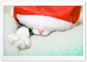 Santa Cat HD Wide Wallpaper for Widescreen