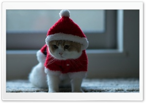 Santa Claus Cat HD Wide Wallpaper for Widescreen