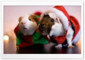 Santa Guinea Pig HD Wide Wallpaper for Widescreen