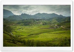 Sapa Rice Paddies HD Wide Wallpaper for Widescreen