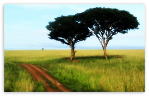 Savanna Trees HD wallpaper for Wide 16:10 5:3 Widescreen WHXGA WQXGA WUXGA WXGA WGA ; HD 16:9 High Definition WQHD QWXGA 1080p 900p 720p QHD nHD ; Standard 4:3 5:4 3:2 Fullscreen UXGA XGA SVGA QSXGA SXGA DVGA HVGA HQVGA devices ( Apple PowerBook G4 iPhone 4 3G 3GS iPod Touch ) ; iPad 1/2/Mini ; Mobile 4:3 5:3 3:2 16:9 5:4 - UXGA XGA SVGA WGA DVGA HVGA HQVGA devices ( Apple PowerBook G4 iPhone 4 3G 3GS iPod Touch ) WQHD QWXGA 1080p 900p 720p QHD nHD QSXGA SXGA ;