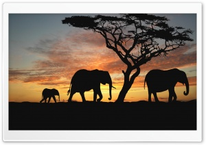 Savannah Elephants HD Wide Wallpaper for Widescreen