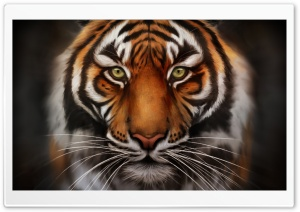 Save The Tiger HD Wide Wallpaper for Widescreen