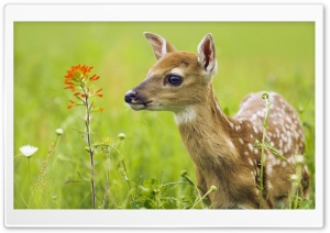 Scared Baby Deer HD Wide Wallpaper for Widescreen