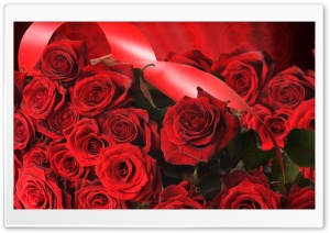 Scarlet Roses With Ribbon HD Wide Wallpaper for Widescreen
