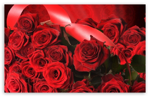 Scarlet Roses With Ribbon HD wallpaper for Wide 16:10 5:3 Widescreen WHXGA WQXGA WUXGA WXGA WGA ; HD 16:9 High Definition WQHD QWXGA 1080p 900p 720p QHD nHD ; Standard 4:3 5:4 3:2 Fullscreen UXGA XGA SVGA QSXGA SXGA DVGA HVGA HQVGA devices ( Apple PowerBook G4 iPhone 4 3G 3GS iPod Touch ) ; Tablet 1:1 ; iPad 1/2/Mini ; Mobile 4:3 5:3 3:2 16:9 5:4 - UXGA XGA SVGA WGA DVGA HVGA HQVGA devices ( Apple PowerBook G4 iPhone 4 3G 3GS iPod Touch ) WQHD QWXGA 1080p 900p 720p QHD nHD QSXGA SXGA ; Dual 16:10 5:3 16:9 4:3 5:4 WHXGA WQXGA WUXGA WXGA WGA WQHD QWXGA 1080p 900p 720p QHD nHD UXGA XGA SVGA QSXGA SXGA ;