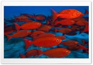 School Of Fish, Maldives HD Wide Wallpaper for 4K UHD Widescreen desktop & smartphone