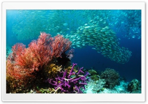 School of Tropical Fish HD Wide Wallpaper for Widescreen