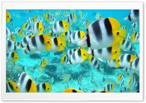 School Of Tropical Fish Tahiti HD Wide Wallpaper for Widescreen