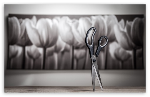 Scissor ❤ 4K UHD Wallpaper for Wide 16:10 5:3 Widescreen WHXGA WQXGA WUXGA WXGA WGA ; 4K UHD 16:9 Ultra High Definition 2160p 1440p 1080p 900p 720p ; UHD 16:9 2160p 1440p 1080p 900p 720p ; Standard 4:3 5:4 3:2 Fullscreen UXGA XGA SVGA QSXGA SXGA DVGA HVGA HQVGA ( Apple PowerBook G4 iPhone 4 3G 3GS iPod Touch ) ; Smartphone 5:3 WGA ; Tablet 1:1 ; iPad 1/2/Mini ; Mobile 4:3 5:3 3:2 16:9 5:4 - UXGA XGA SVGA WGA DVGA HVGA HQVGA ( Apple PowerBook G4 iPhone 4 3G 3GS iPod Touch ) 2160p 1440p 1080p 900p 720p QSXGA SXGA ;