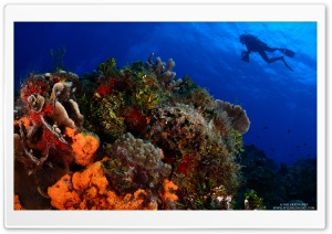Scuba Diving HD Wide Wallpaper for Widescreen