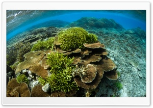 Scuba Diving Coral Reef HD Wide Wallpaper for Widescreen