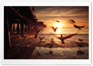 Sea and Fly Birds HD Wide Wallpaper for Widescreen