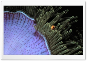 Sea Anemone HD Wide Wallpaper for Widescreen