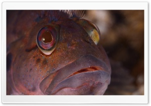 Sea Fish Close Up HD Wide Wallpaper for Widescreen