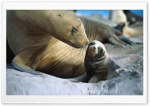 Sea Lion, Cub. Ultra HD Wallpaper for 4K UHD Widescreen desktop, tablet & smartphone
