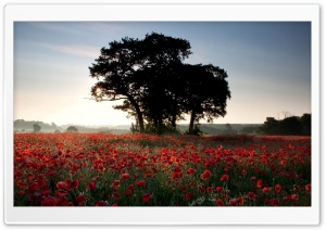 Sea Of Poppies HD Wide Wallpaper for Widescreen