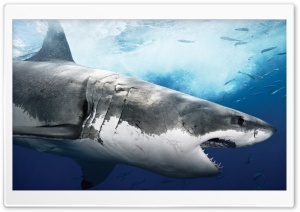 Sea Predator Shark HD Wide Wallpaper for Widescreen