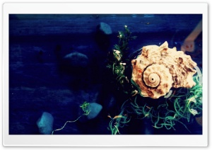 Sea Shell HD Wide Wallpaper for Widescreen