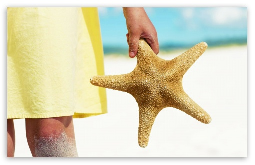 Sea Star HD wallpaper for Standard 4:3 Fullscreen UXGA XGA SVGA ; Wide 16:10 5:3 Widescreen WHXGA WQXGA WUXGA WXGA WGA ; HD 16:9 High Definition WQHD QWXGA 1080p 900p 720p QHD nHD ; Other 3:2 DVGA HVGA HQVGA devices ( Apple PowerBook G4 iPhone 4 3G 3GS iPod Touch ) ; Mobile VGA WVGA iPhone iPad PSP - VGA QVGA Smartphone ( PocketPC GPS iPod Zune BlackBerry HTC Samsung LG Nokia Eten Asus ) WVGA WQVGA Smartphone ( HTC Samsung Sony Ericsson LG Vertu MIO ) HVGA Smartphone ( Apple iPhone iPod BlackBerry HTC Samsung Nokia ) Sony PSP Zune HD Zen ;