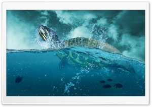Sea Turtle HD Wide Wallpaper for Widescreen