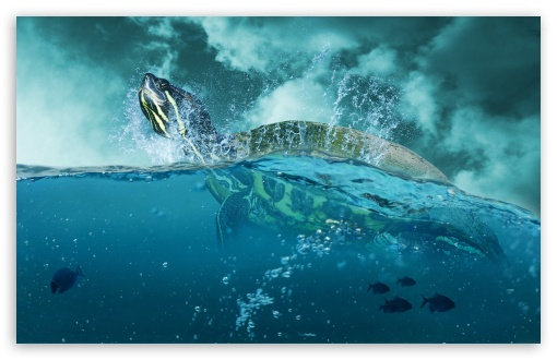 Sea Turtle ❤ 4K UHD Wallpaper for Wide 16:10 5:3 Widescreen WHXGA WQXGA WUXGA WXGA WGA ; 4K UHD 16:9 Ultra High Definition 2160p 1440p 1080p 900p 720p ; Standard 4:3 5:4 3:2 Fullscreen UXGA XGA SVGA QSXGA SXGA DVGA HVGA HQVGA ( Apple PowerBook G4 iPhone 4 3G 3GS iPod Touch ) ; Tablet 1:1 ; iPad 1/2/Mini ; Mobile 4:3 5:3 3:2 16:9 5:4 - UXGA XGA SVGA WGA DVGA HVGA HQVGA ( Apple PowerBook G4 iPhone 4 3G 3GS iPod Touch ) 2160p 1440p 1080p 900p 720p QSXGA SXGA ;