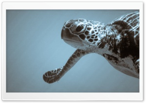 Sea Turtle Ultra HD Wallpaper for 4K UHD Widescreen desktop, tablet & smartphone