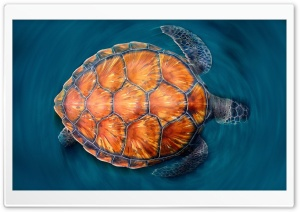 Sea Turtle HD Wide Wallpaper for 4K UHD Widescreen desktop & smartphone